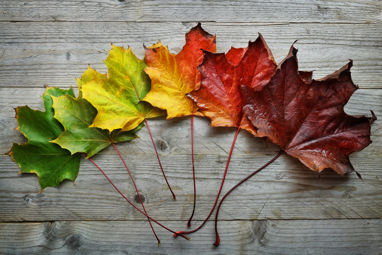 Seven Home Projects To Do Before Fall